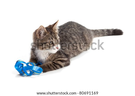 The kitten plays a ribbon, is isolated not a white background