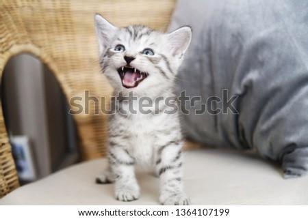 The kitten screams. The kitten laughs. Kitten scared #1364107199