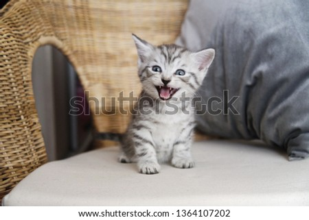 The kitten screams. The kitten laughs. Kitten scared #1364107202