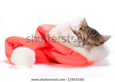 the  kitten sleeping in the Santa's cap