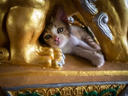 The Kitten Slept Happily in a Golden Chinese Lion Statue in The Garden