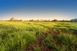 The landscape is wet land tropical.it is grass field because is summer season. This is wet land is in Tha lay noi, thailand.