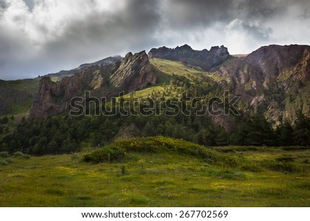 the landscape. mountain landscape with alpine meadows and pine forest #267702569
