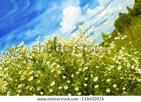 The landscape of Sunny, warm weather in the field with daisies and clouds.
