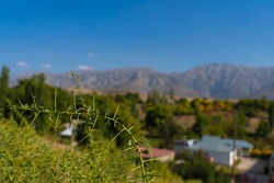 The landscape of the foothills of Kazakhstan. Mountains in the background. Blue sky. Ladybug on the foreground plant. Foothill vegetation. Green grass and trees. Mountain panorama