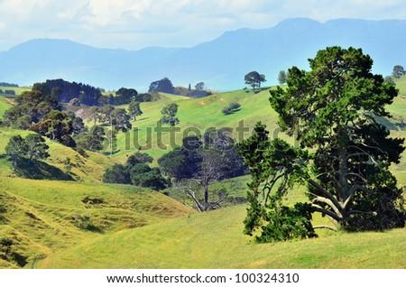 The landscape of the Hobbiton Movie Set and Farm, Matamata New Zealand.