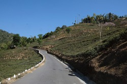 The landscape of the roads of North Bengal passing through the hills,tea gardens,forests.