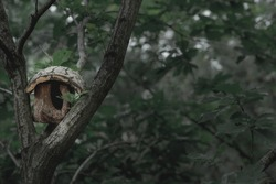 The large wooden bird's nest is on the tree in the evening time.