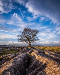 The last of the autumnal evening light at the lone tree near Winskill Stones