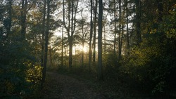 The last sunrays of the day makes this forest magical.