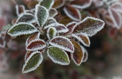 The late fall transmitted to an early winter when the first frost comes and the leaves getting white frost edges
