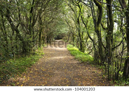 The laurisilva forest, road with fog in autumn. Tenerife. (Canary Islands)