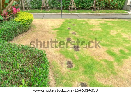 The lawn in front of the house is disturbed by pests and diseases causing damage to the green lawns, lawns in poor condition and requiring maintenance. #1546314833