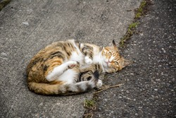 The lazy cat is lying lazily on the road