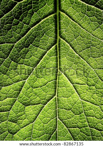 The leaf close up. Abstract background. #82867135