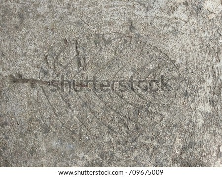 The  leaf imprint on the cement floor.  #709675009