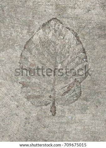 The  leaf imprint on the cement floor.  #709675015