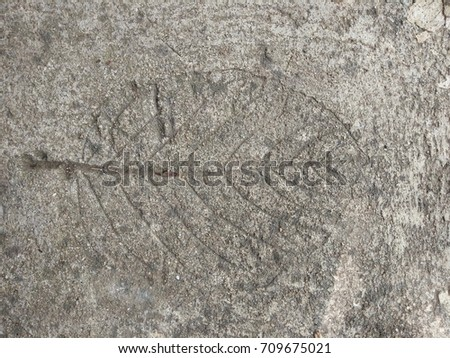 The  leaf imprint on the cement floor.  #709675021