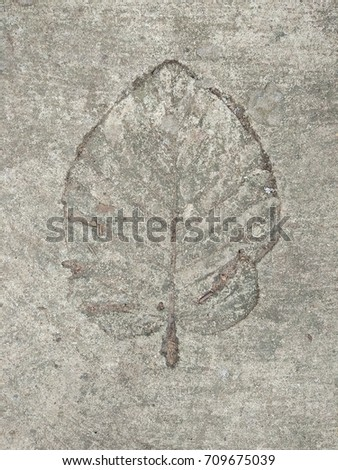 The  leaf imprint on the cement floor.  #709675039