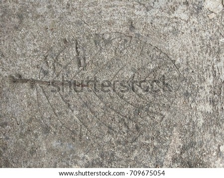 The  leaf imprint on the cement floor.  #709675054