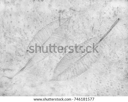 The leaf imprint on the cement floor background #746181577