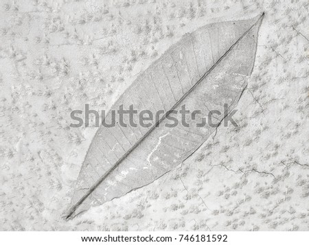 The leaf imprint on the cement floor background #746181592