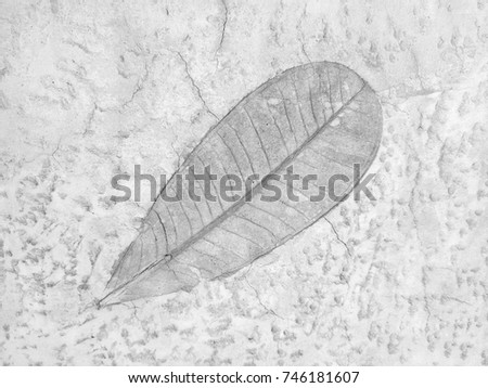 The leaf imprint on the cement floor background #746181607