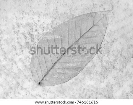 The leaf imprint on the cement floor background #746181616