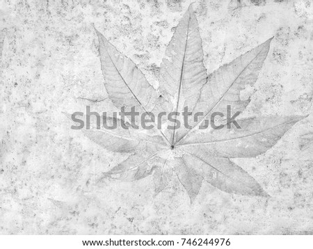 The leaf imprint on the cement floor background #746244976