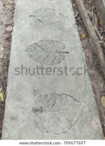 The leaf imprints on the cement floor.  #709677697