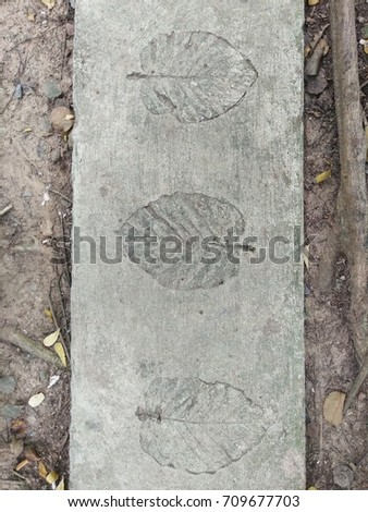 The leaf imprints on the cement floor.  #709677703