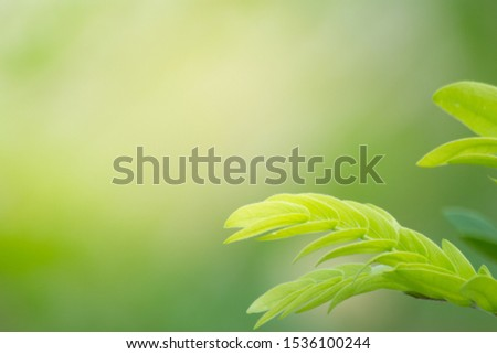the leaf in nature abstract background, the nature background, plant in nature