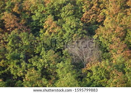 The leaves also change color.  Naree also changed  The lover is still unfaithful.  Then what will be certain