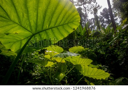 The leaves are lush with lush rain to restore the forest during the rainy season. #1241968876