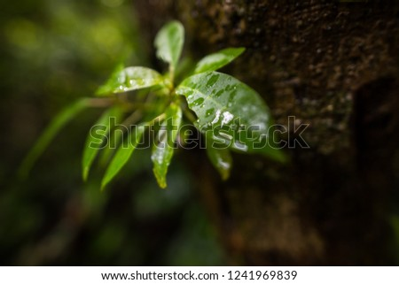 The leaves are lush with lush rain to restore the forest during the rainy season.(Selective Focus) #1241969839