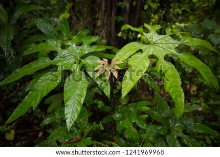 The leaves are lush with lush rain to restore the forest during the rainy season.(Selective Focus) #1241969968