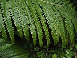 the leaves of the fern fall to the ground in the contrasting light