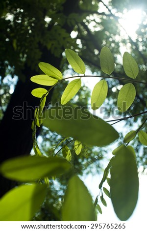 The leaves of trees in the sun