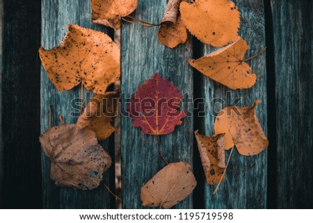 the leaves on the boards #1195719598