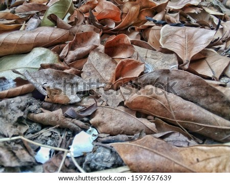 The leaves that lie on the ground fill the ground.