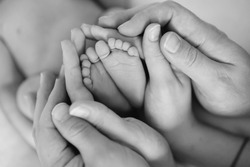the legs of the child in the arms of our mother and father. feet of a newborn baby. little baby legs. black and white photo