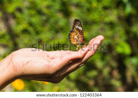 The leopard lacewing (Cethosia cyane euanthes) butterfly on human hand