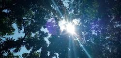 The light from the sun is a rainbow halo.
