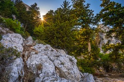 The light of the Sun filtering through the pine trees and cypress trees on the rocky hillside of Saint Hilarion Castle in Northern Cyprus