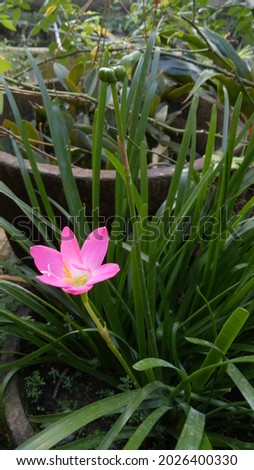 The lilies are bright and irise-colored to match the summer weather Photo stock ©