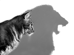 The Lion Within - Profile of a house cat casting a lion's shadow on a white wall