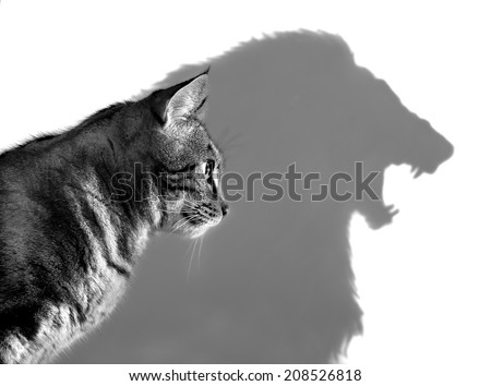 The Lion Within - Profile of a house cat casting a lion\'s shadow on a white wall