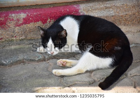 The little black and white cat sleeping on the pavement outside the city.