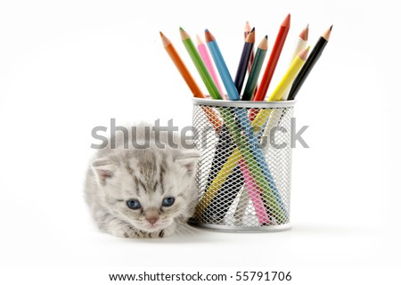 The little British kitten under glass with colored pencils