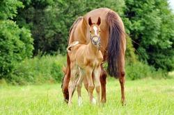 The little foal in the meadow.